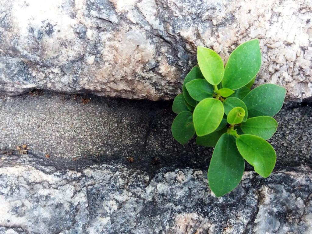 Nívea Ferraz de Freitas - Muro verde
